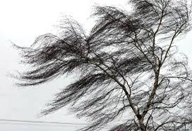 Увага! 2 березня – пориви вітру 15-20 м/с