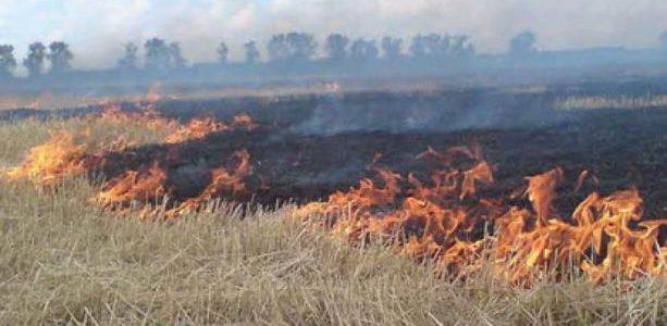 За самовільне спалювання сухої рослинності – адміністративна та кримінальна відповідальність