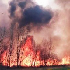 Пожежі в природних екосистемах