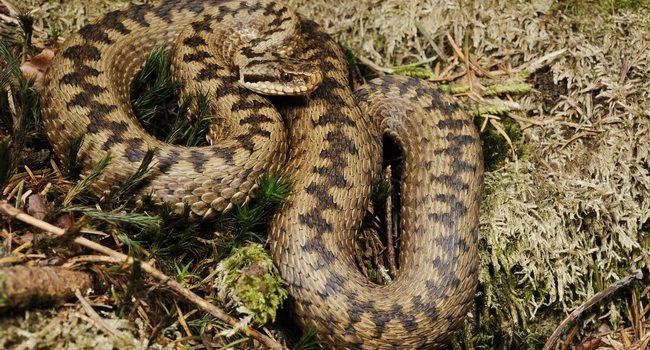В області є антитоксин проти зміїної отрути