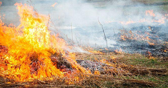 Наслідки спалювання сухої рослинності: сотні гектарів випаленої землі, двоє загиблих людей