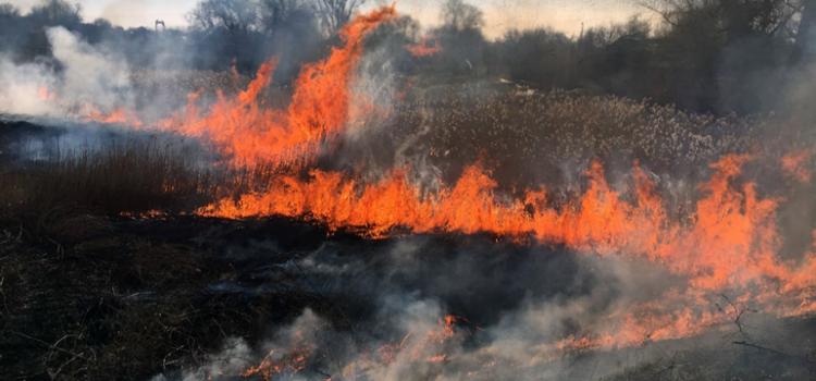 З початку березня в області сталося 306 пожеж на відкритих територіях